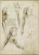 The Muscles and Veins of the Arm c.1510-11