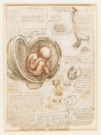 The foetus in the womb c.15111