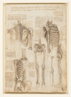 The Skeleton c.1510-11
