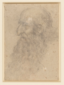 The head of an old bearded man in profile c.1517-18