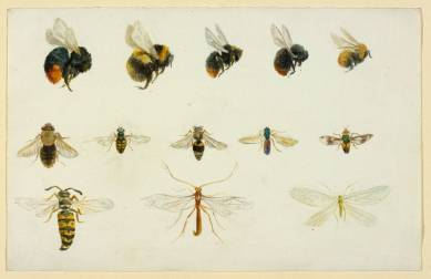 Studies of bees and other insects, 1895