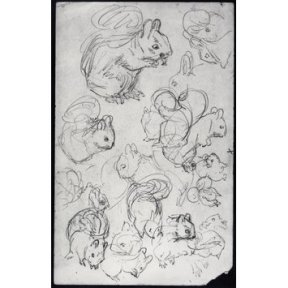 Sketches of a squirrel