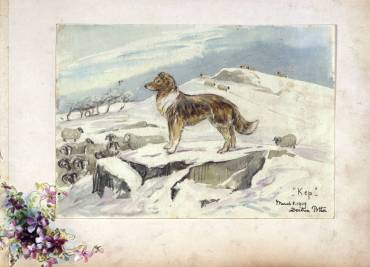 Sketch of Kep guarding sheep, 1909